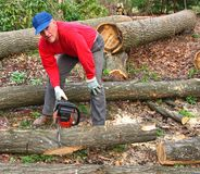 Man cutting log into sections. Man cutting oak log with chainsaw Royalty Free Stock Photo