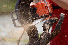 Man cutting lumber with chainsaw Royalty Free Stock Images
