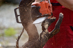 Man cutting lumber with chainsaw Royalty Free Stock Photography