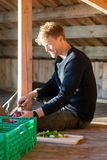 Man Cutting Onion While Sitting In Shed stock photography
