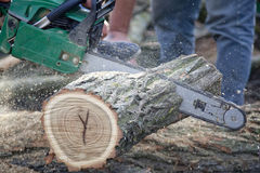 Man Cutting Piece Of Wood With Chain Saw. Stock Photography