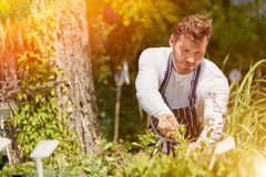 Man cutting plants Stock Images