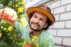 Man cutting the rose bush Stock Photo