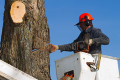 Man cutting tree royalty free stock images