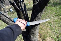 Man cutting tree branch with the handsaw stock image