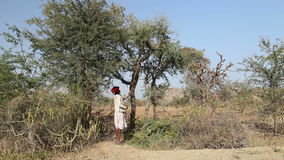 Man cutting tree branches for cattle on treetop at countryside in Jodhpur. stock video