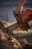 A man cutting tree with chainsaw. Man at work royalty free stock image