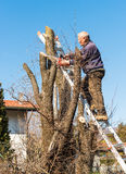 Man is cutting tree. Stock Photography