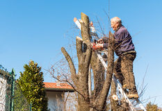 Man is cutting tree. Royalty Free Stock Image