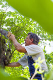 Man cutting a tree Royalty Free Stock Image