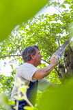 Man cutting a tree Royalty Free Stock Photography