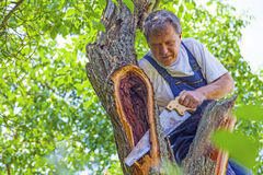 Man cutting a tree with  saw Royalty Free Stock Image