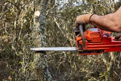 Man cutting trees using an electrical chainsaw in the forest royalty free stock photos