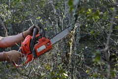 Man cutting trees using an electrical chainsaw in the forest royalty free stock images