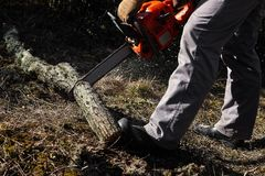 Man cutting trees using an electrical chainsaw in the forest stock photos
