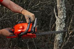 Man cutting trees using an electrical chainsaw in the forest stock image