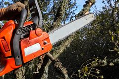 Man cutting trees using an electrical chainsaw in the forest royalty free stock photo