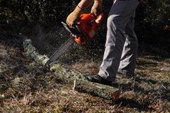 Man cutting trees using an electrical chainsaw in the forest stock images