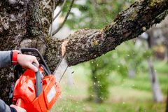 Man cutting trees using an electrical chainsaw. And professional tools stock image