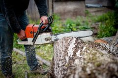 Man cutting trees using an electrical chainsaw Stock Photos