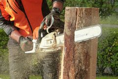 Man Cutting Tress Using Chainsaw Stock Photo