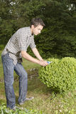 Man cutting and trimming box tree heart Stock Photo