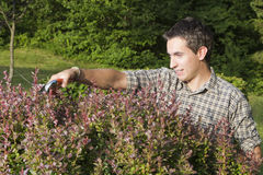 Man cutting and trimming hedges Royalty Free Stock Images