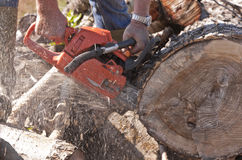 Man cutting wood with a chainsaw Royalty Free Stock Photography