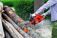 Man cutting wood logs with chainsaw. Creating flying shavings and dust on green hedge background in sunny summer day Stock Images