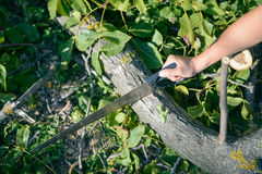 Man cutting a wood tree with a hand saw on green outdoors. Closeup Stock Photos