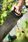 Man cutting a wood tree with a hand saw on green outdoors. Closeup Stock Image