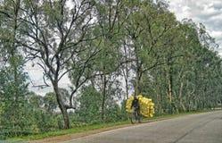 Rwandan Man on Bicycle, Transporting Empty Cooking Oil Jugs stock image