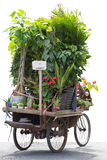 Man cycling and carrying a lot of flowers and plants on his bicy Royalty Free Stock Images