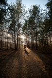 Man is cycling on forest road in evening with sunlight Royalty Free Stock Image