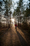 Man is cycling on forest road in evening with sunlight Stock Photography