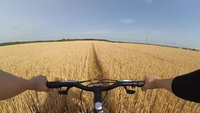 A man cyclist on a bike rides through a wheat field. On a sunny summer day. Horizon skyline, clear sky. Action camera go pro. Caucasian stock footage