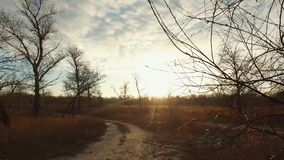 A man cyclist rides a mountain bike on a dirt road, rural road in a field at sunset in cold weather. Discipline cross. Country or mtb stock video footage