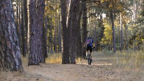 Man cyclist rides paths in the Pine Forest stock video footage