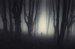 Man in dark haunted forest with fog on Halloween. Night royalty free stock photography