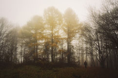 Man in dark woods with fog and fir trees in autumn Royalty Free Stock Image