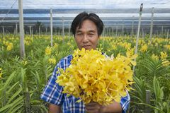 Man demonstrates flowers at the orchid farm in Samut Songkram, Thailand. Royalty Free Stock Image