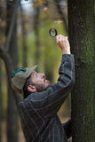 Man detective with a beard examines single dry leaf. Man detective with a beard wearing a cap and plaid jacket examines through magnifying glass single dry leaf stock image