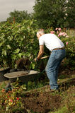 Man digging his allotment Royalty Free Stock Image
