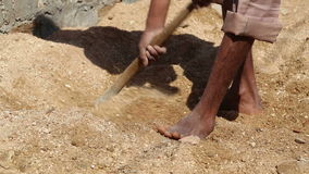 Man digging sand with a shovel at field in Jodhpur, low angle view. stock video