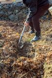 Man digging with spade in autumn or spring garden,. Man digging shovel Stock Images