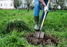Man digs a hole Royalty Free Stock Images
