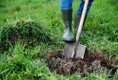 Man digs a hole Stock Image