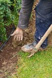 Man digs a hole to plant a tree stock photography