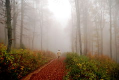 Man disappearing in fogy fores Royalty Free Stock Photography