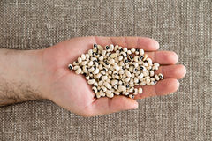 Man displaying a handful of black-eyed beans Royalty Free Stock Image